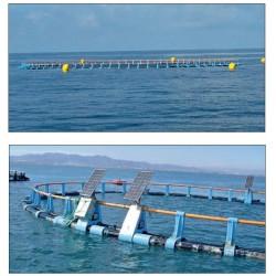 Systèmes de cages offshore SPYA