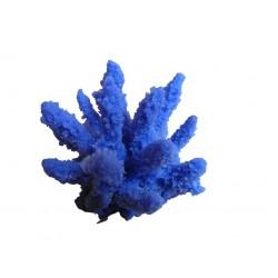 Mini corail Acropora