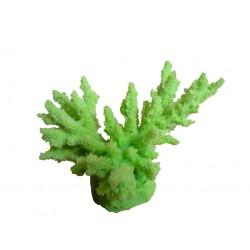 Petit corail Acropora