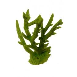 Petite branche Acropora